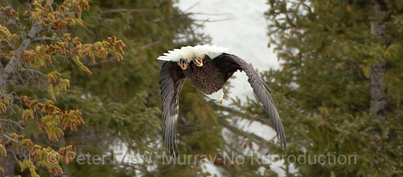 Eagle departs.
