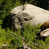 Erratic  Boulder and Black Bears.