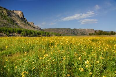 DSC_7565 Yellowstone R