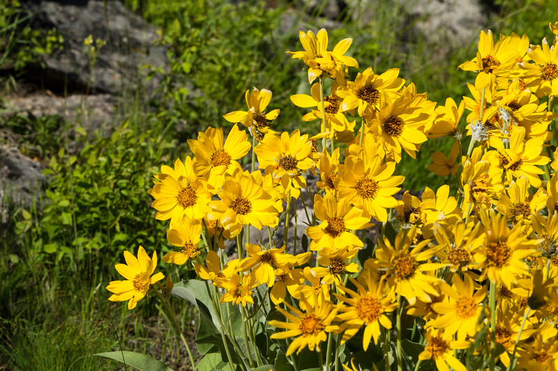 Mule's Ear<br /> Mule's Ear, Lamar Valley, Yellowstone National Park, Wyoming