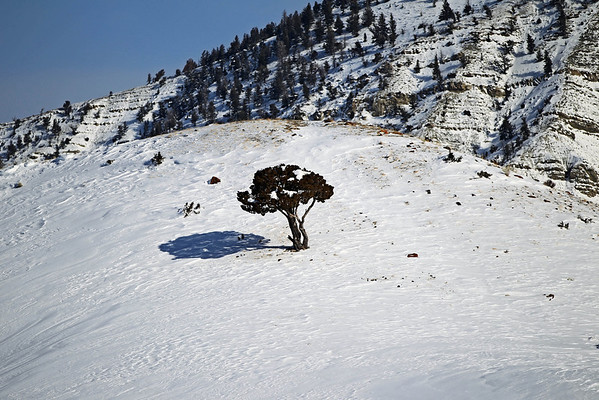 Yellowstone - Winter 2010