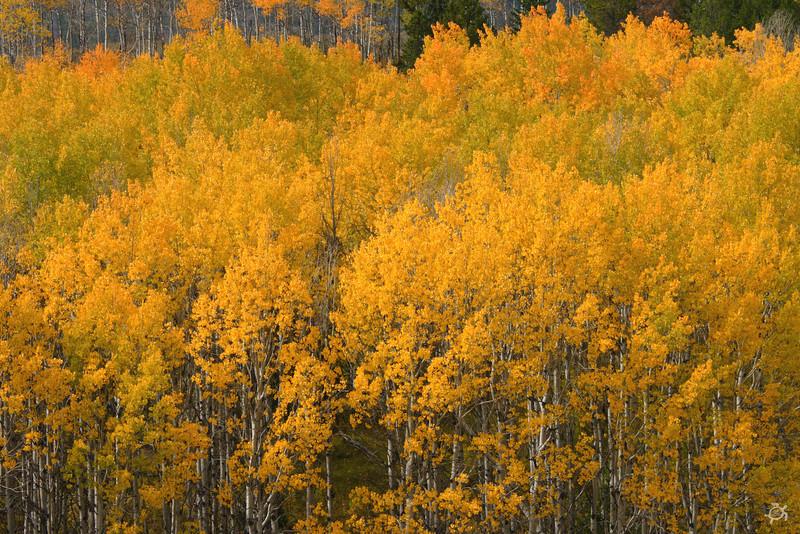 9-2007 Montana 175