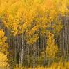 9-2007 Montana 192