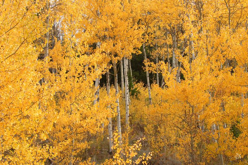 9-2007 Montana 148
