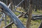 2013-08-1819 Yellowstone200