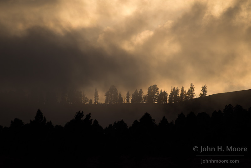 Ridgeline trees on a stormy day at Mammoth in Yellowstone National Park