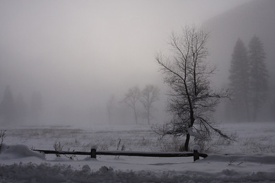 Yosemite valley shrouded in snow and fog still belies a serene beauty.