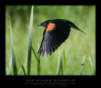 RW_Blackbird_6061_FW