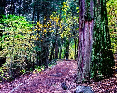The trail next to the Merced River by the Pohono Bridge. The color in here was fabulous.