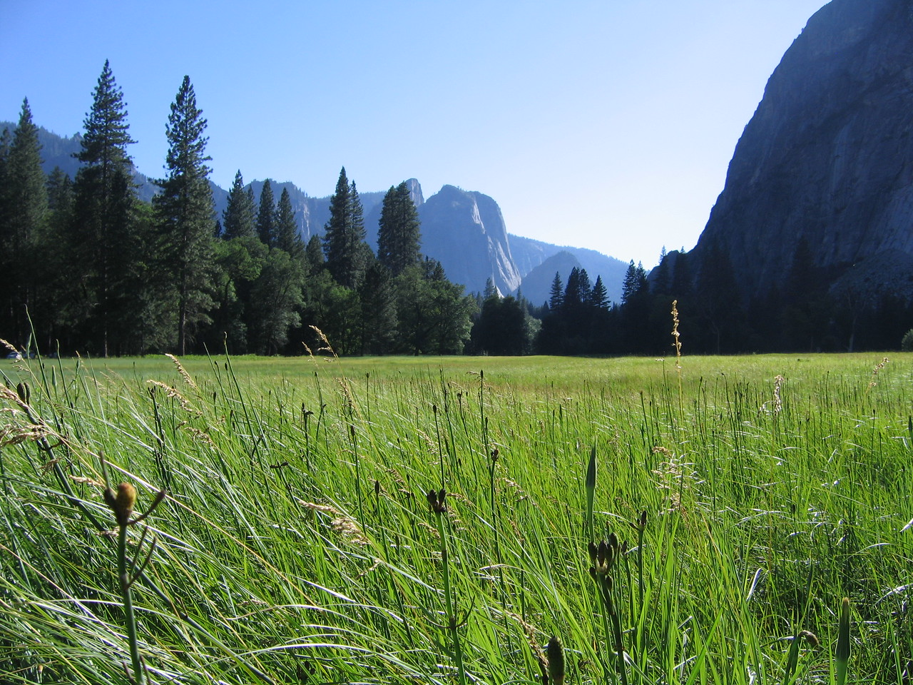 Meadow at Yosemite Falls.