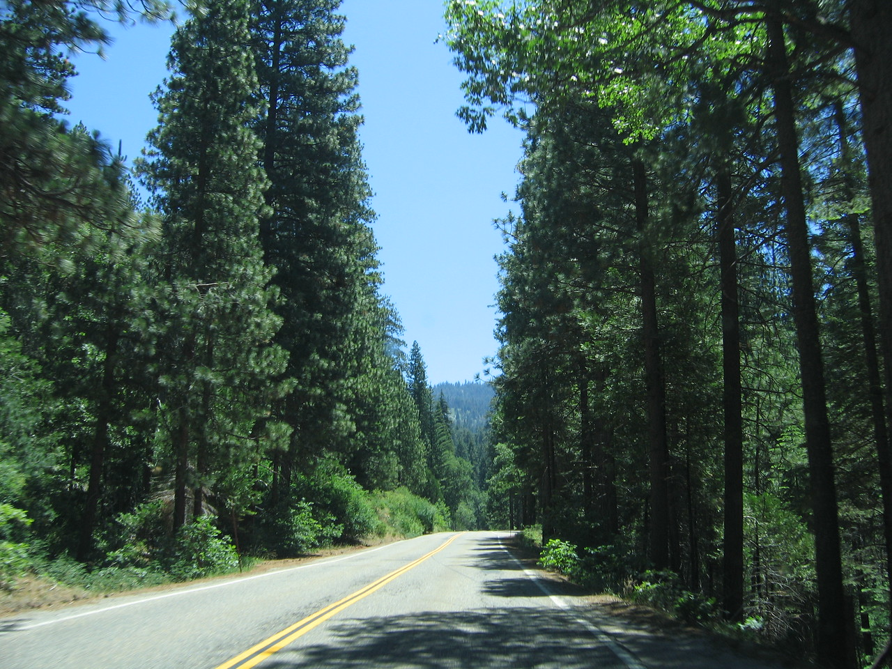 Driving through Yosemite.