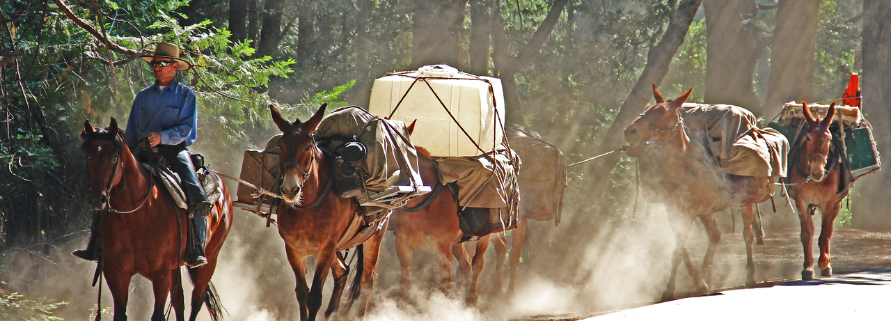 Supply mule train for the high camps.