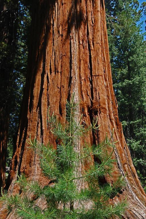 Yosemite June 2013