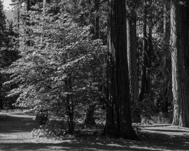 Somewhere out back of the Ahwahnee Hotel.