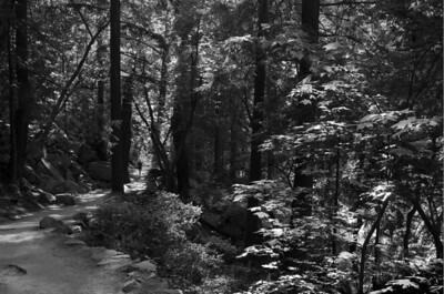 Mist Trail going down.