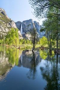 Yosemite Falls reflecting in the Merced from Swinging Bridge.