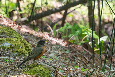 This little Robin stayed still long enough for me to get this shot.