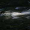 20060710-IMG_4731