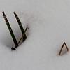 Sedum in the snow