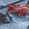 Frost edged leaf on ice shards
