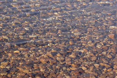 Like lake Tenaya, the river in Tuolumne meadows was stocked with tiny round pebbles.