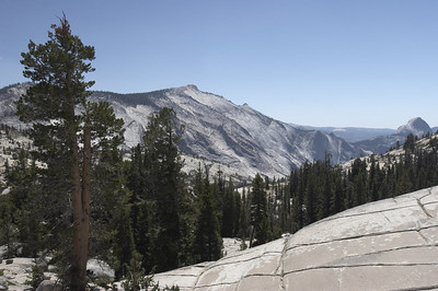 More of the barren forest at Olmstead point.  Cloud's rest is to the left and the back of half dome to the extreme left of this photo.