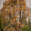 080814_Yosemite-2008_005
