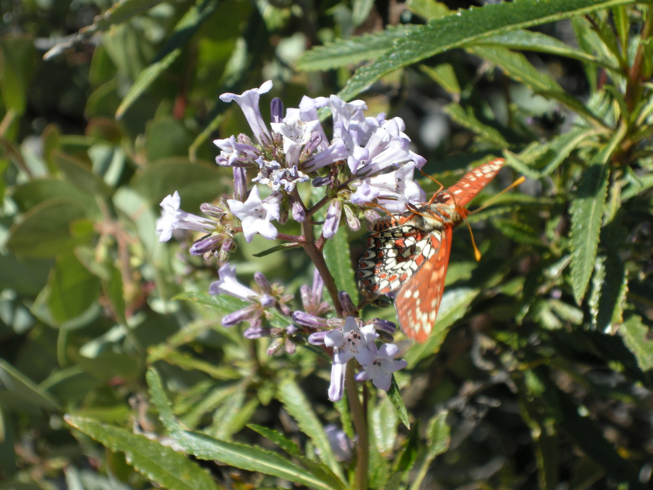 Butterflies and flowers were along the trail.
