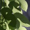 20060710-IMG_4420