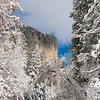 El Capitan looms over snowy trees as a winter storm clears in Yosemite Valley