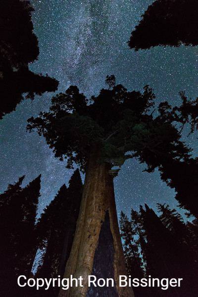 The Grizzly Giant and Milky Way