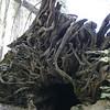 20060712-IMG_4945