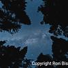 Mariposa Grove Canopy