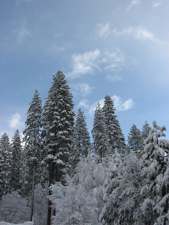 Yosemite  (13)