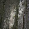 20060712-IMG_4783