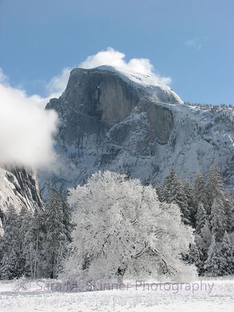 Yosemite  (20)
