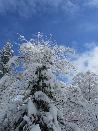 Capturing Snow