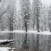 Flooded field and trees during a heavy snowstorm.  Yosemite National Park.