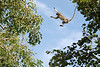 Leap of Faith: You might think that monkeys are so agile that they don't hesitate to leap across wide chasms.  Not so with this young vervet monkey. When it came his turn to follow the troup across a wide gap between trees, he took his time looking across and looking down, obviously guaging the distance and calculating the risk... and not liking it.  Finally, he took a flying leap of pure faith, and succeeded!