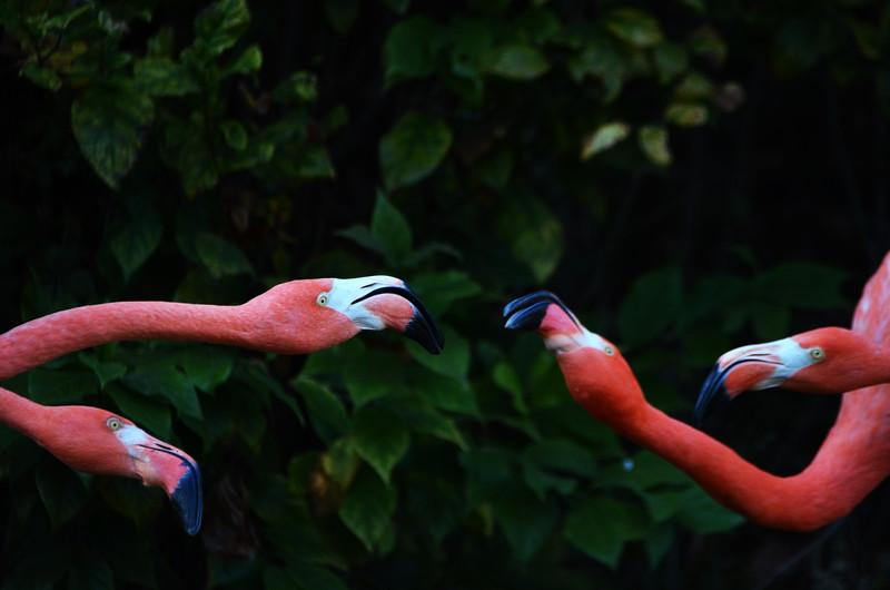 Flamingo Face-Off 2