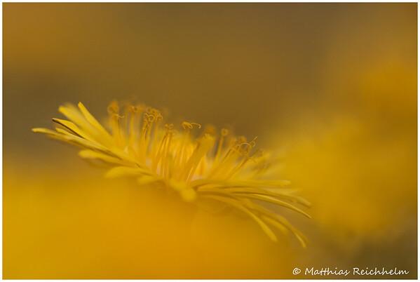 IMG_8328_20120426_Canon-EOS-50D