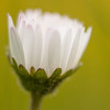 IMG_8248_20120423_Canon-EOS-50D