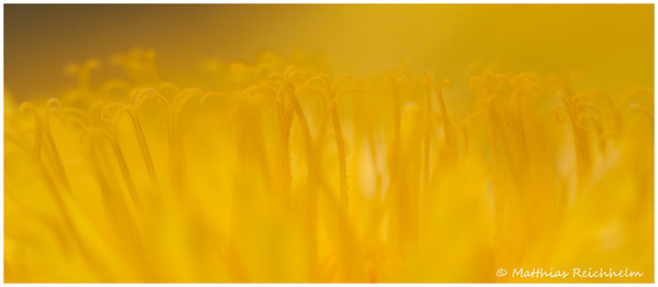IMG_8436_20120427_Canon-EOS-50D