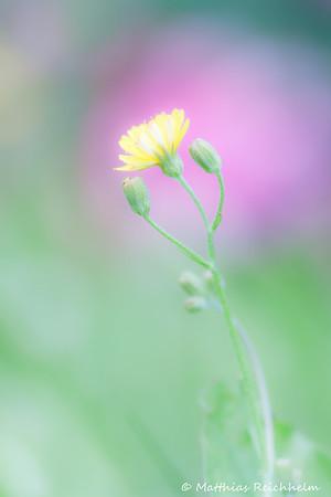 IMG_1188_20120708_Canon-EOS-50D