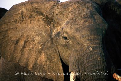 Elephant, Kazuma Pan National Park, Zimbabwe