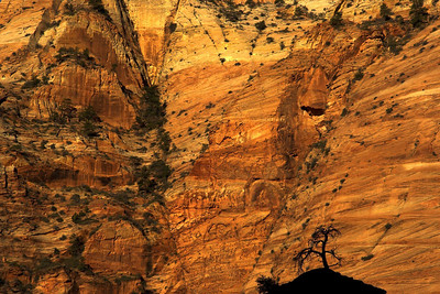 The sunlight glows off the rock cliffs of Zion. Zion National Park, Utah.
