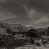 mountain goats / Zion Park