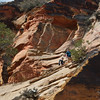 trail to Angel's Landing / Zion Park