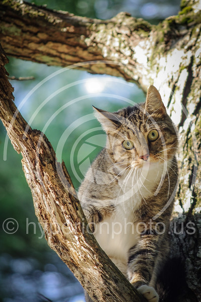 Treed kitty.