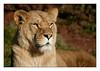 South Lakes Wild Animal Park, Dalton-in-Furness, Cumbria